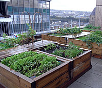roof allotments